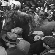 Man leading horse, Horse Auction, NYC, 1947