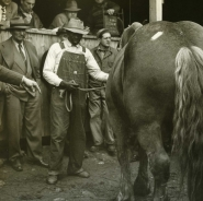 Horse surrounded by men, NYC, 1947